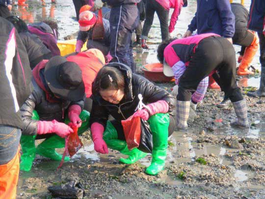 Jindo Sea-Parting Festival Digging