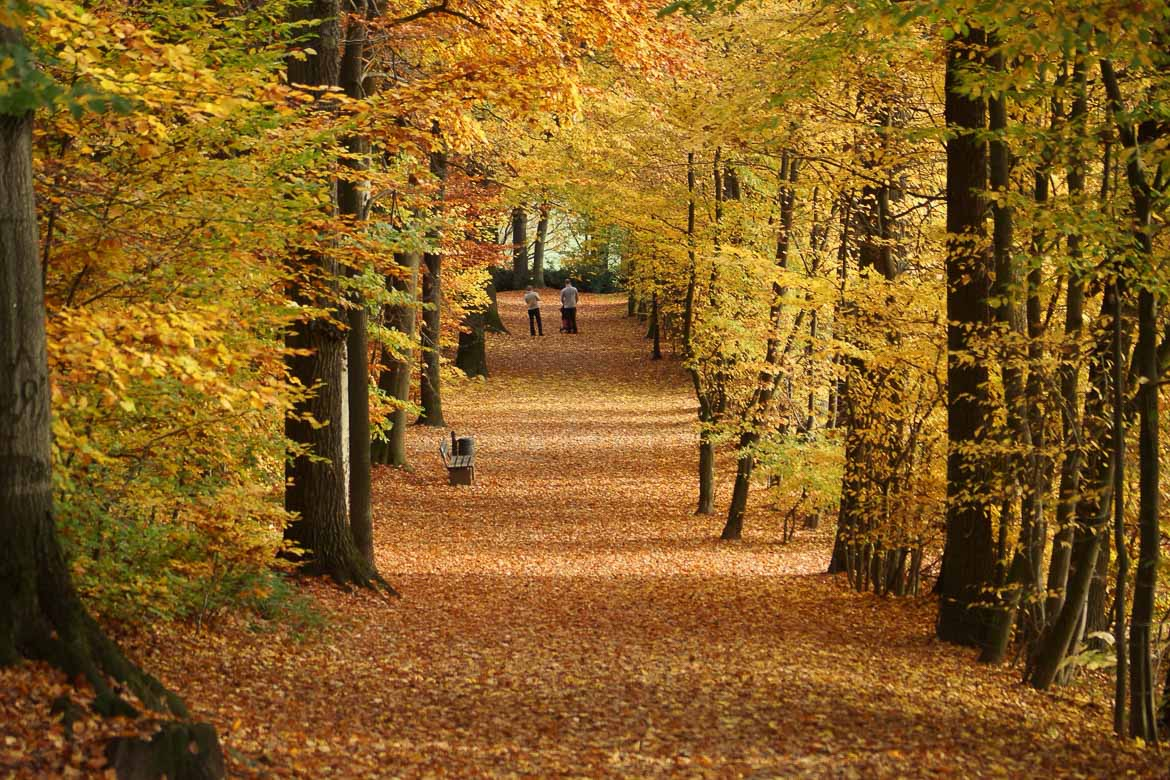 Bayreuth Travel Guide - Park in Autumn